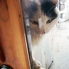 Open me, please! by tonymm6491