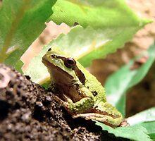 Green Frogger by Danielle Morin
