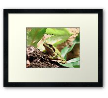 Green Frogger Framed Print