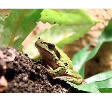 Green Frogger Photographic Print
