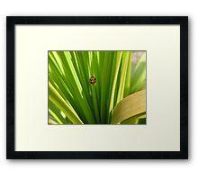 Ladybug Lair Framed Print