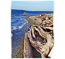 Picnic Point Driftwood 1 Poster
