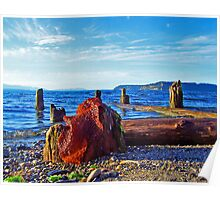 Picnic Point Driftwood 8 Poster
