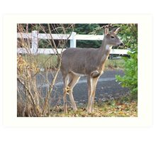 Doe Deer In Our Yard Art Print