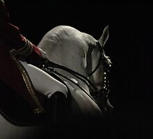 Stallion shadow by MooCatMooCat