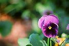 Purple Love by Olivia Moore