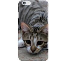 Monty the lively Cat  iPhone Case/Skin
