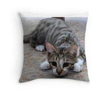 Monty the lively Cat  Throw Pillow