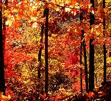 Autumn Splash by NatureGreeting Cards ©ccwri