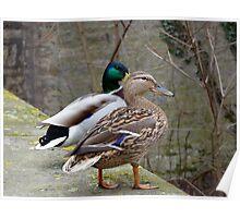 Herr und Frau Ente Poster