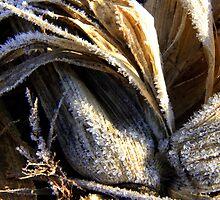 frozen corn by Marc Sullivan
