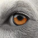 Eye See You ~ by Ginny York