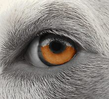 Eye See You ~ by Ginny York