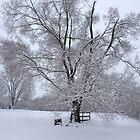 Snowy Days by trisha22