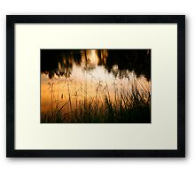 Grasses at Willow Pond Framed Print