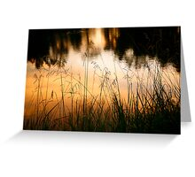 Grasses at Willow Pond Greeting Card