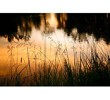 Grasses at Willow Pond Photographic Print