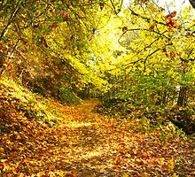 Autumn in Oregon by iChad