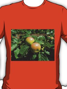 Apples Ripening In The Sunshine - Heligan T-Shirt