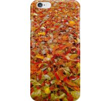 Carpet Of Color iPhone Case/Skin