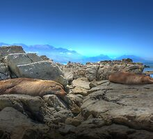 Seals dreaming in New Zealand by Giovanna Tucker