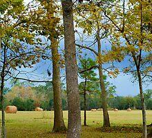 In my backyard by Bonnie T.  Barry
