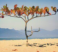Brazilian Beach Tree by dezhdez