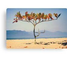 Brazilian Beach Tree Canvas Print