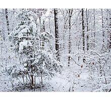 Snowy Forest Wonderland Photographic Print