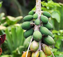 Papayas by Amber Gregory