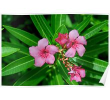 Tropical Pink Poster