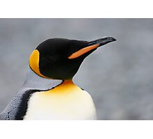 Solo penguin Photographic Print