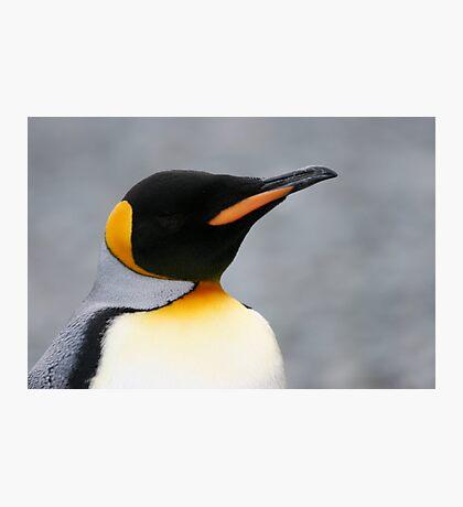 Solo penguin Photographic Print