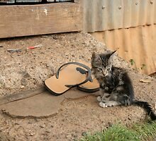 Fii kitten 2 by squires
