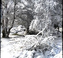 Cannock Chase Snow by Laura Cameron