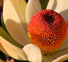 Flower 5 by squires