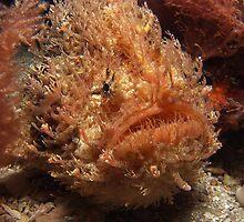 Tasselled Anglerfish. by James Peake Nature Photography.