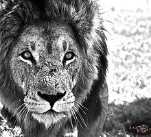 """Antelope Park, Zimbabwe: """"Echo"""" by basiccaptures"""