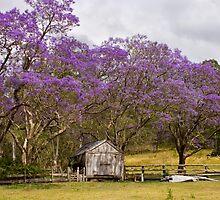 Jacaranda Barn by Elmacca