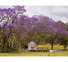 Jacaranda Barn Photographic Print