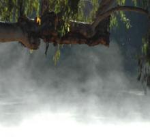 Mist in the bush. Sticker