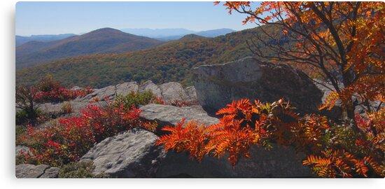 Blue Ridge Palette by Jane Best