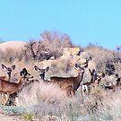 The Herd by marilyn diaz