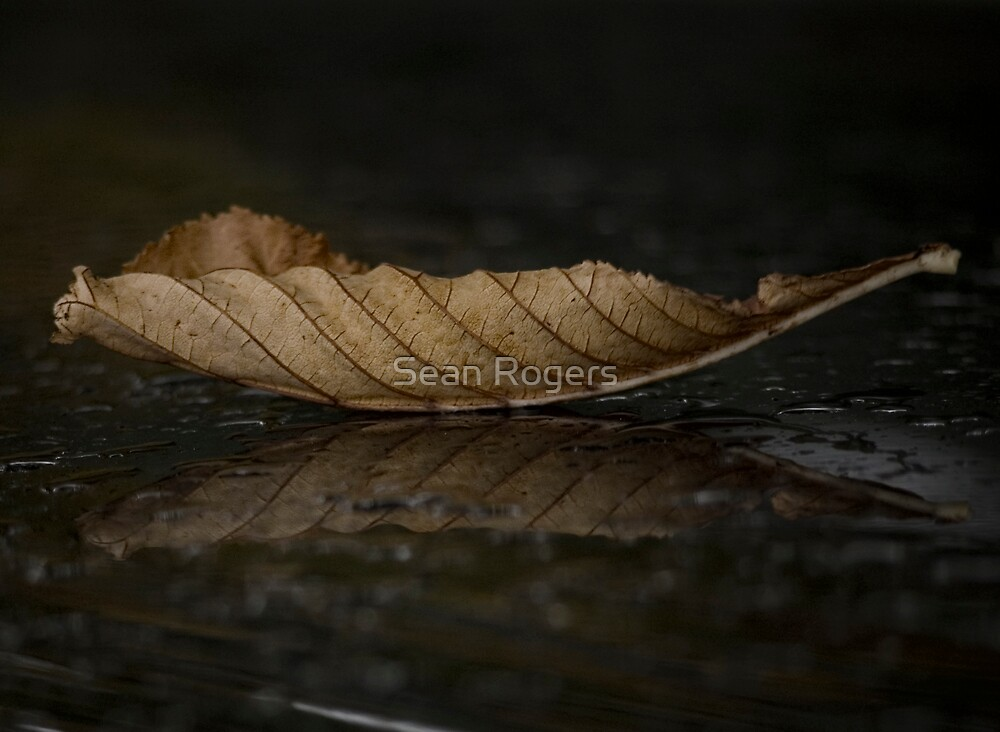 Autumnal Fall by Sean Rogers