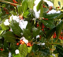Holly Berries by Marita McVeigh