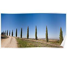 Tuscan Cyprus Trees Poster