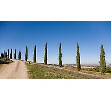 Tuscan Cyprus Trees Photographic Print