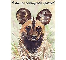 I am an endangered species! Photographic Print