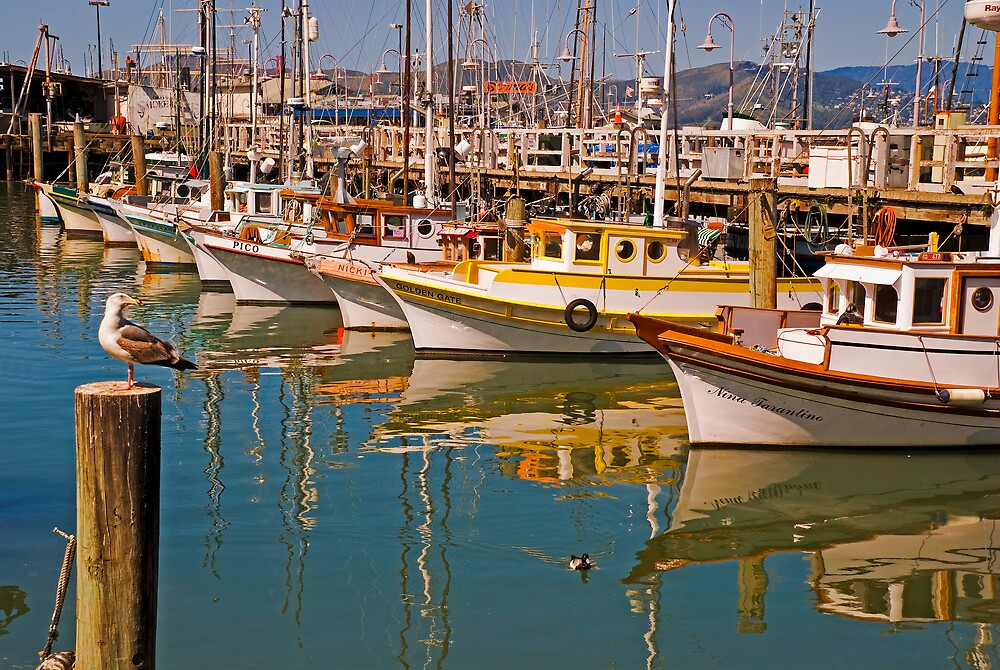 Fishing fleet fisherman 39 s wharf san francisco by for Fishing store san francisco