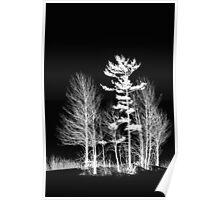 Trees - White On Black Poster